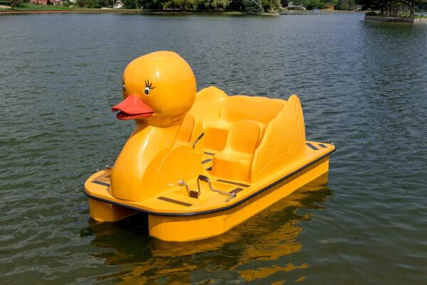 Paddle Wheeler Duck